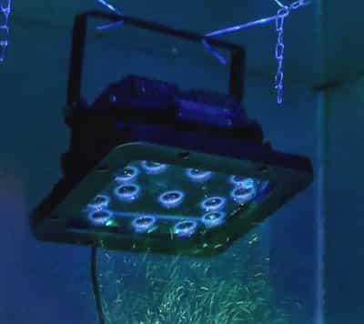 Lamp EDGE 13